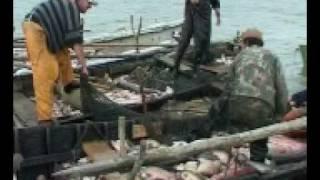 film pescarii din jurilovca.3gp