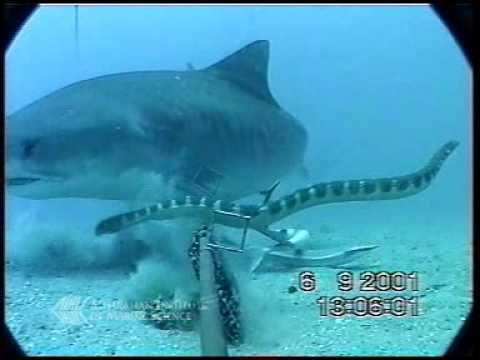 Xxx Mp4 Shark Vs Sea Snake 3gp Sex