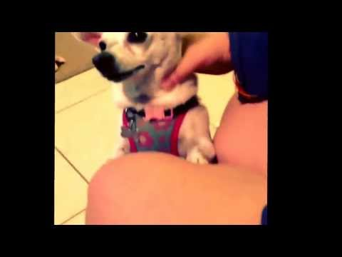 Xxx Mp4 Doggy Hand Job Lol 3gp Sex