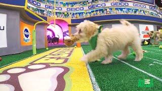 First Touchdown Of Puppy Bowl XIV