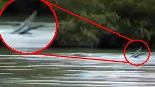 5 Extraterrestrials Caught On Camera & Spotted In Real Life!