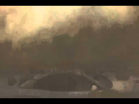 FxGuru BMW Luftbombe