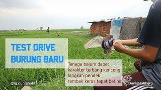 Test Terbang Burung Merpati Balap Ring T.K Bandung, Tembak Keras Sprint Jos