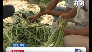 Agrowon: Beed based Bhagwat Thombare's Success Story of Drumstick Farming