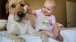 Dogs & Babies Are Best Friends