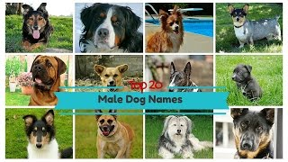 Top 20 Popular Male Dog Names