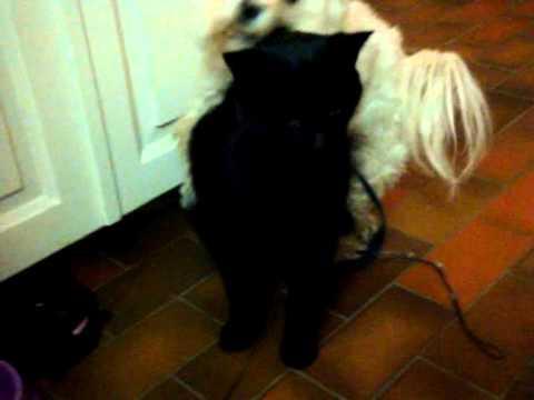 Xxx Mp4 My Dog Fuck My Cat 3gp Sex