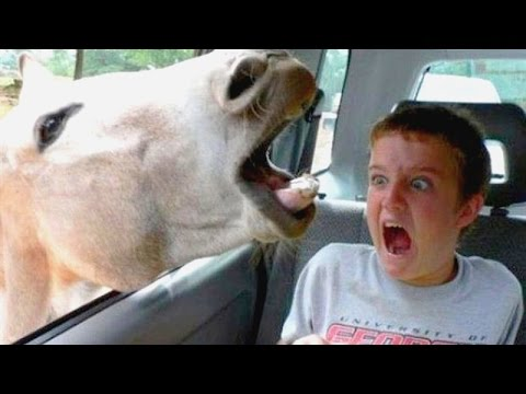 Funniest and most hilarious moments on Earth that can make anyone laugh Funny compilation