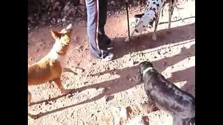Entrenamiento con silbato para perros.