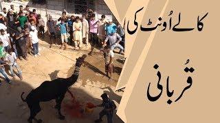 اونٹ کی قربانی | Camel Qurbani Nazimabad Karachi - ount rassi tura ke bhaag gaya