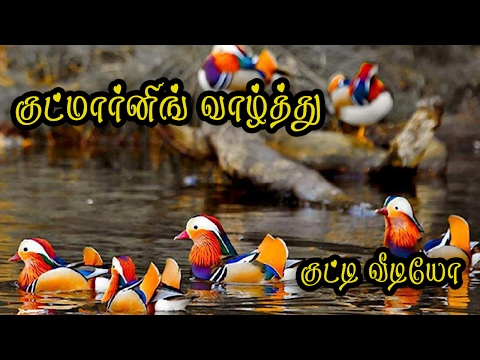 Good morning Wishes in Tamil Whatsapp Video  #070
