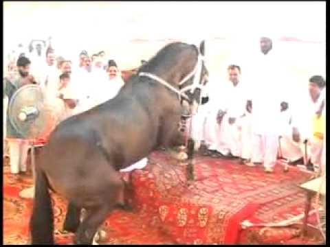 HORSE DANS PINDI AWAN 12.flv
