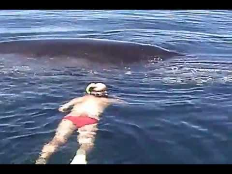 Xxx Mp4 Humpback Whale Shows AMAZING Appreciation After Being Freed From Nets 3gp Sex