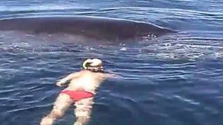 Humpback Whale Shows AMAZING Appreciation After Being Freed From Nets