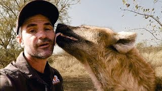 How Tough Are Hyenas? | The Lion Whisperer