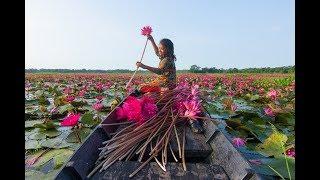বরিশালের শাপলার বিল । সাতলা শাপলার বিল । Barisal ShaplarBil । Canal of water lily