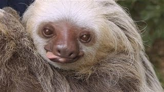 For the Love of Sloths