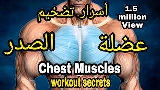 عضلة الصدر ( البنش ) - أسرار تضخيم و تقوية الصدر | Chest workout