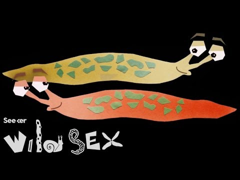 Xxx Mp4 If You Think Your Sex Life Is Tough Try Being A Slug 3gp Sex
