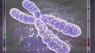 xromosom mutasiyalar
