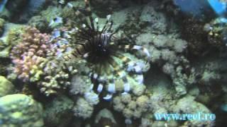 ReefAquarium