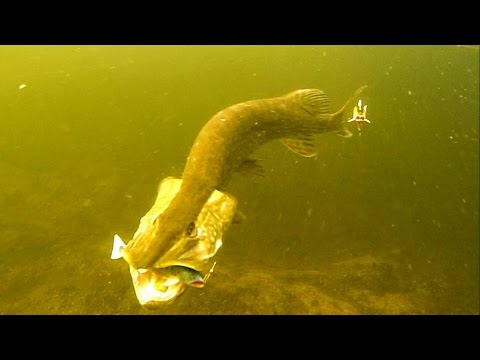 how to clean a pike video