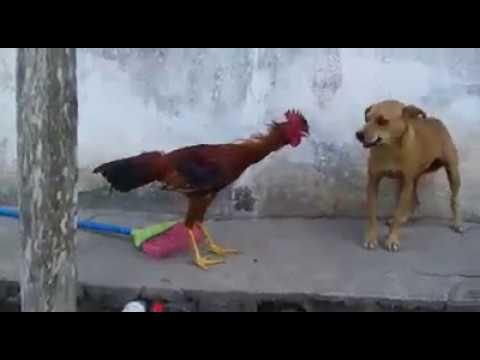 Xxx Mp4 एक मुर्गा कुत्ते पर भारी गोपालगंज भोरे मैं कंचन बाबू 3gp Sex