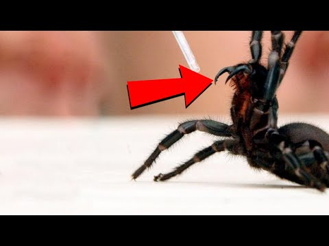 Creatures With The Most Powerful Venom