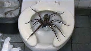 12 Scary Pics of GIANT Spiders Explained