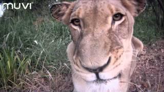 Veho MUVI HD: South African Safari - Close Up