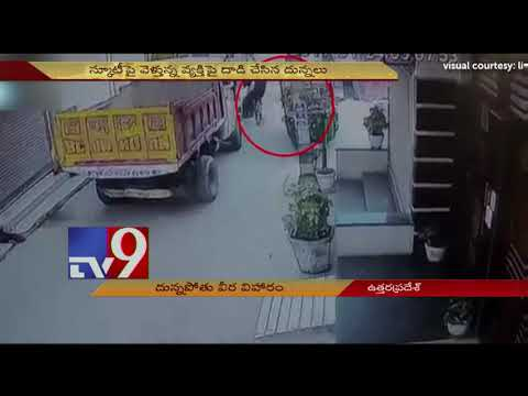 Xxx Mp4 Bull Knocks Down Scooty Driver In UP TV9 Today 3gp Sex
