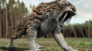 Documental De TIGRE Diente De sable cazadores prehistoricos Documental De nationaL  Geographic