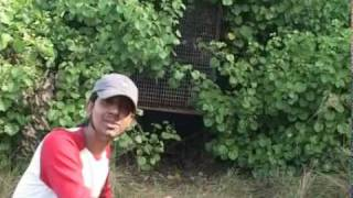 Discover The World Biggest Mangrove Forest Sundarban. Part 02