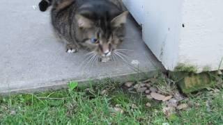 One Eyed Cyborg Kitty of Destruction