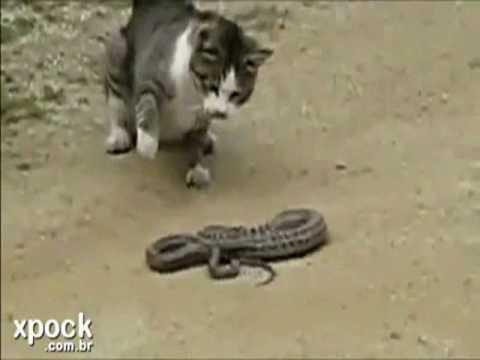 O Gato ea Cobra