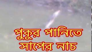 Natore Snake Dance Footage