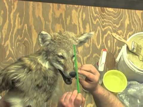 Mounting a Coyote Mini Pedestal