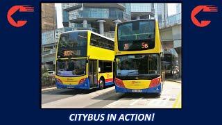 城巴巴士行駛片段! Citybus Limited in Action!
