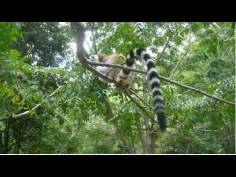 Viaje Madagascar Parque Nacional de isalo