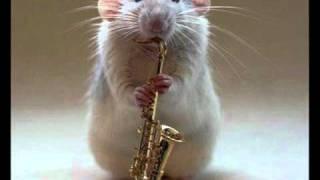rato cantando como zaqueu
