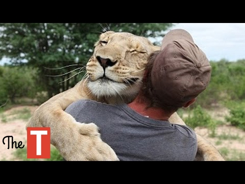 10 Unbelievable Animals That SAVED People s Lives