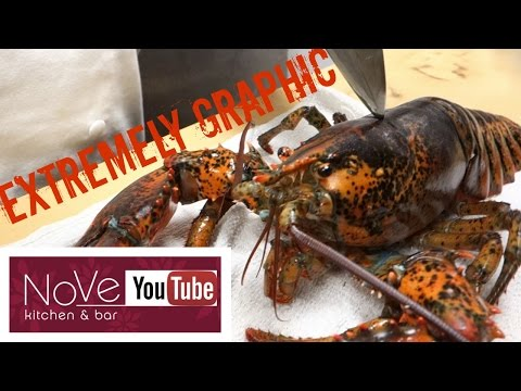 EXTREMELY GRAPHIC Lobster Cantonese Chinese Inspired