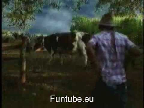 Cow Sex By a Man