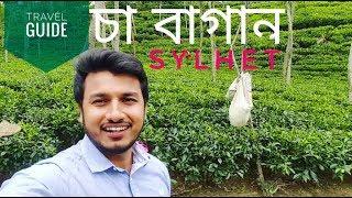 Cha Bagan | Sylhet | Bangladesh | Vlog 03 | 2k17