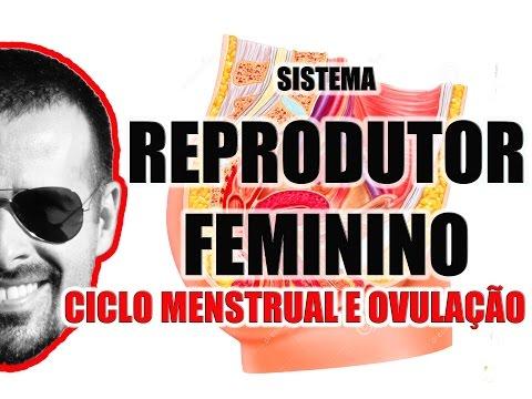 Vídeo Aula 050 Sistema Reprodutor Feminino O Ciclo Menstrual menstruação e a Ovulação