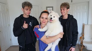 WE SURPRISED OUR MOM WITH A PUPPY!