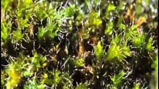Moss growing Time Lapse