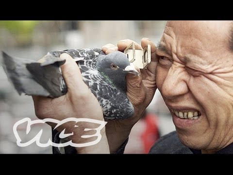 China s Millionaire Pigeon Racers Full Length
