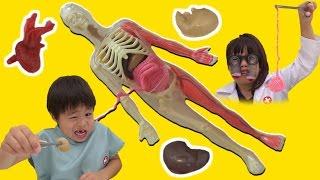 スクイーズ 人体模型くん 解剖したよ♫ お医者さんごっこ こうくんねみちゃん Squishy Human Body Parts Toy