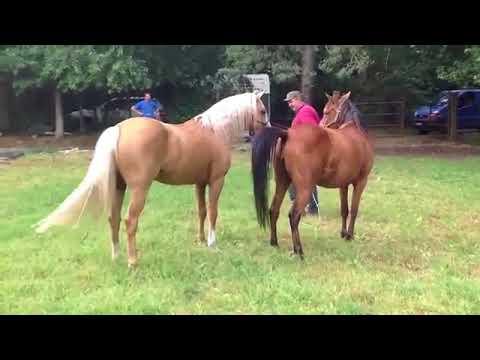 Xxx Mp4 Horse 3gp Sex